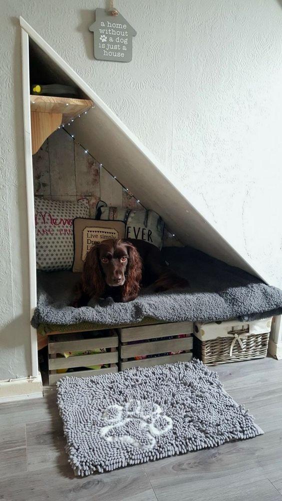 Mascotas: un lugar para ellos