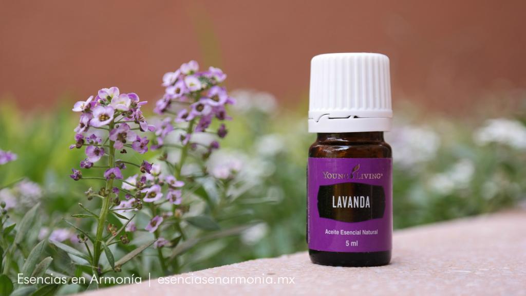 Aromaterapia con lavanda