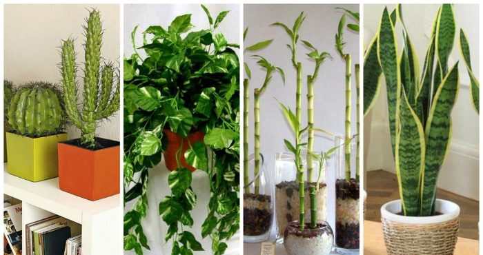 Beneficios de plantas