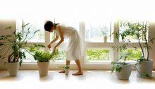 Beneficios de plantas en el hogar